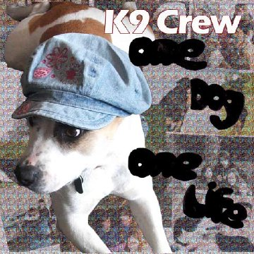 http://indiemusicpeople.com/uploads/146364_12_5_2010_9_39_47_AM_-_K9cdcover_small.jpg