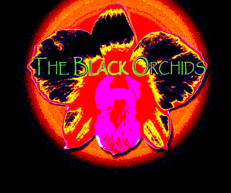 http://indiemusicpeople.com/uploads2/93959_4_16_2008_9_49_01_AM_-_BLACKorchsYELLOWnew.jpg