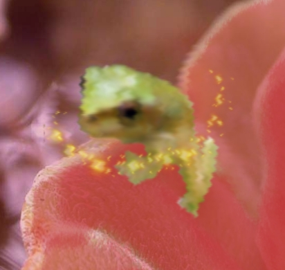 http://indiemusicpeople.com/uploads2/Lost_Frog_Fading_In_Haha_-_Lost_Frog_Fading_In_Haha_Logo_Test.jpg